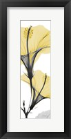 Framed Hibiscus Yellow
