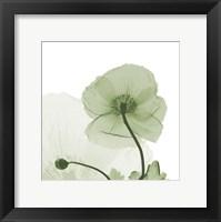 Framed Sage Iceland Poppy