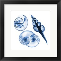 Framed Blue Shells Two