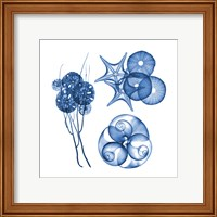 Framed Blue Shells Four
