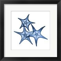 Framed Blue Three Starfish