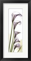Framed Lavender Dreams
