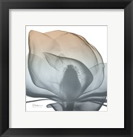 Framed Magnolia Earthy Beauty New