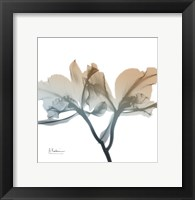 Framed Earthy Orchid