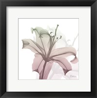 Framed Neapolitan Lily