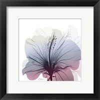 Framed Tasty Grape Hibiscus
