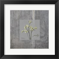Framed Concrete Parsley