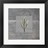 Framed Concrete Rosemary