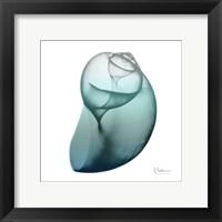 Framed Water Snail 3
