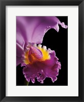 Framed Purple Orchid
