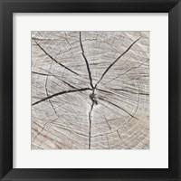 Framed Tree Rings