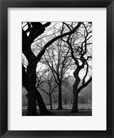 Framed Central Park Dancing Trees