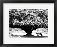 Framed LA Arboretum
