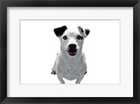 Framed Jack Russell Buddy 3