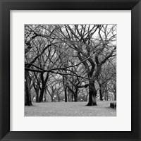 Framed Central Park 2B
