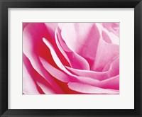 Framed Rose Nahbereich 2
