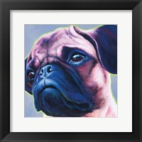 Framed Blue Bulldog 82486
