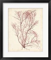 Framed Watercolor Sea Grass I
