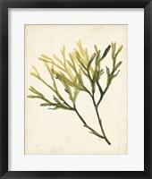 Framed Watercolor Sea Grass V