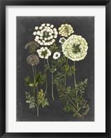 Bookplate Floral II Framed Print