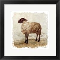 Framed Rustic Sheep