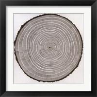 Framed Tree Theory