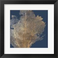 Gold Coral I Framed Print