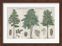 Framed Woodland Chart I