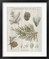 Framed Woodland Chart III