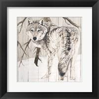 Framed Wolf in Woods on Barn Board
