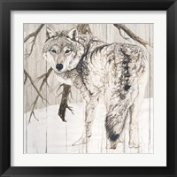 Framed Wolf in Woods on Barn Board