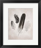 Feather Group I BW Framed Print