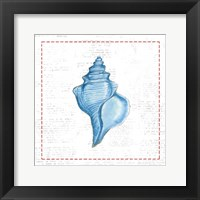 Navy Conch Shell on Newsprint with Red Framed Print