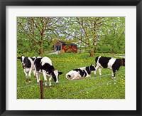 Framed Bovine Beauties, Pennsylvania