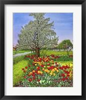 Framed Dorothy's Tulips, Eden Ny