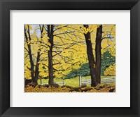 Framed Golden Day, New Hampshire