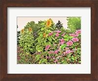 Framed Sunflower Quartet