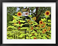 Framed Sunflowers And Birdhouse