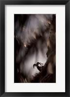 Framed Bighorn Silhouette Best