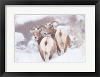 Framed Bighorns Two