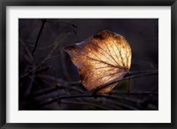 Framed Bright Leaf