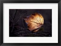Framed Bright Leaf