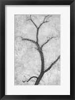 Framed Cottonwood Form