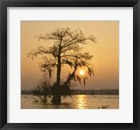 Framed Cypress