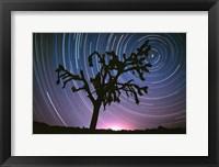 Framed Joshua Tree North Star
