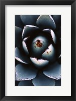 Framed Ladybugs Agave
