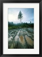 Framed Lonefir