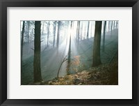 Framed Smoke Forest