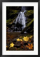 Framed Waterfall Maple Leaves