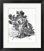 Framed Treesc
